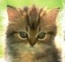 Котенок подкидыш постоянно плачет - последнее сообщение от Lilija-K