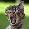 плешь под   подбородком у кота - последнее сообщение от Лиза Б.