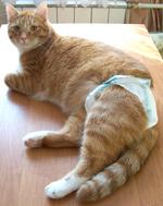 Цистит обострение у кота