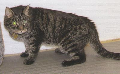 Вывих суставов у кошек окопник натирка для суставов