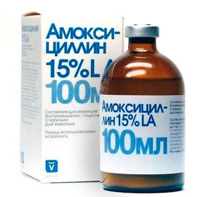 амоксициллин раствор инструкция по применению - фото 2