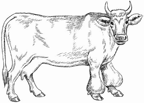 Бурсит запястного сустава у коровы синовит тазобедренного сустава