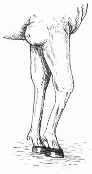 Бурсит локтевого сустава у коней узи голеностопных суставов