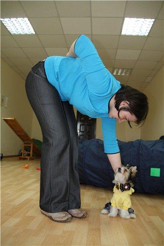 Как научить глухую собаку выполнять команды