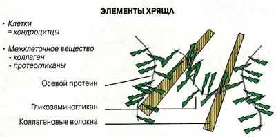 Схематическое изображение протеогликана в хрящевой ткани