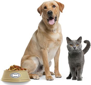 Поведение кошек и собак при выборе корма