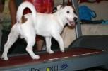 Влияние бега на физическое и эмоциональное состояние собаки
