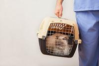 Правила перевозки животных в самолете