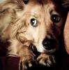 Если собака боится грозы