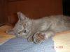 Прививки котенку - последнее сообщение от Julie