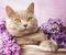 Как помыть кошку? - последнее сообщение от Arlandaa