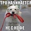 Пёс стал озабоченый - последнее сообщение от Satira