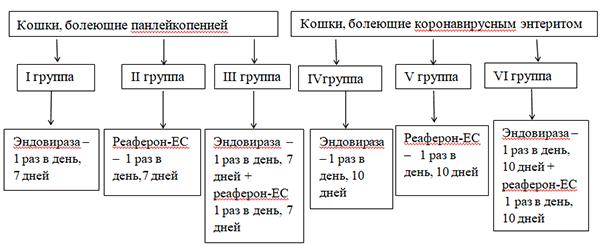 схема лечения коронавируса у кошки