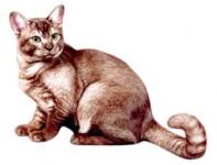 Азиатская дымчатая порода кошек