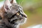Глисты у кошки: что делать?