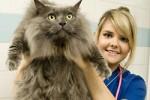 В каком возрасте кастрировать кота?