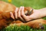 Бережная помощь печени кошек и собак маленьких пород