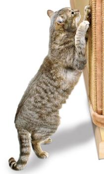 Если кошка точит когти в неположенном месте