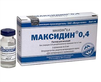 Применение максидина и сальмозана при лечении инфекционных заболеваний собак и кошек