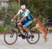 Если собака гоняется за машинами, велосипедистами и другими подвижными объектами